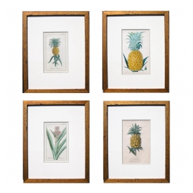 an exotic set of 4 European hand-colored pineapple engravings