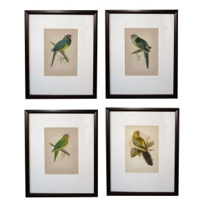 two pair of well-rendered english chromolithographs of parrots; dated 1884; priced per pair