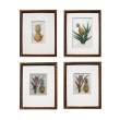 a well-rendered set of 4 european hand-colored pineapple engravings
