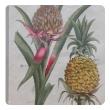 set of 4 european hand-colored pineapple engravings