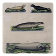 a charming set of 3 german hand-colored copper engravings of seals from the Bilderbuch für Kinder (Picture Book for Children, dated 1798) by F.J. Beruch