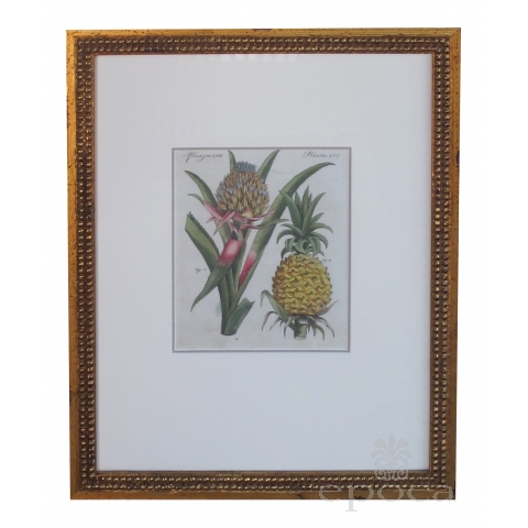a well-rendered french 18th century hand-colored pineapple engraving