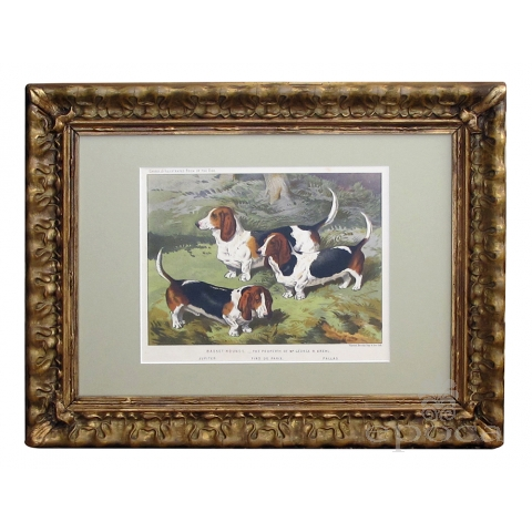 well-rendered english chromolithograph of basset hounds in a field, circa 1881